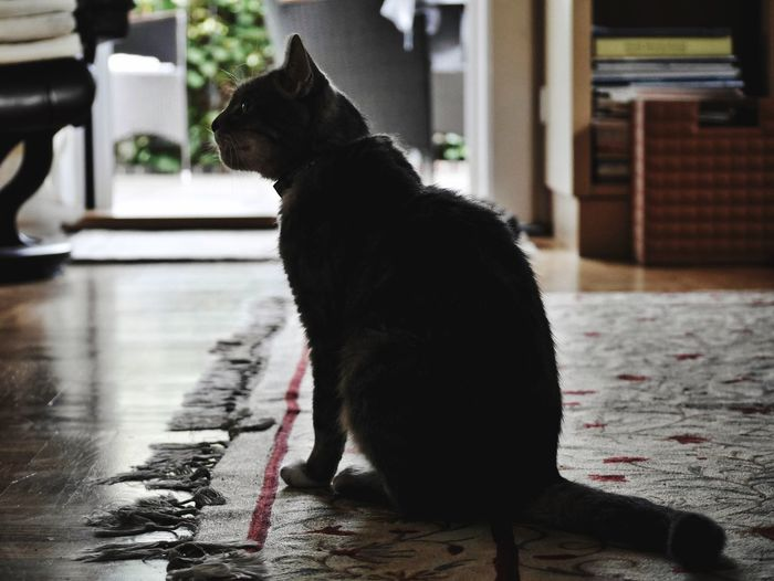 Black dog looking away while sitting on floor at home