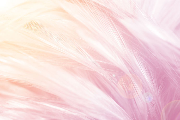 Pink Color Feather  Softness Backgrounds Close-up Full Frame No People Textured  Elégance Vulnerability  Fragility Selective Focus Nature White Color Abstract Fluffy Macro Lightweight Studio Shot Outdoors Abstract Backgrounds Purple