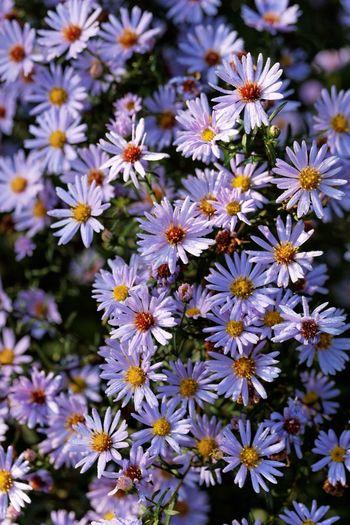 Morning Dew Flowers Sunny
