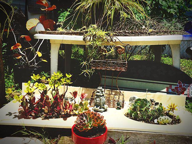 Enjoying Life Doghairstudio Gypsy Girl Gypsylife Repurposed Sink Brevardsbest Creative Gardening Bonding With My Ginger Bf 💕