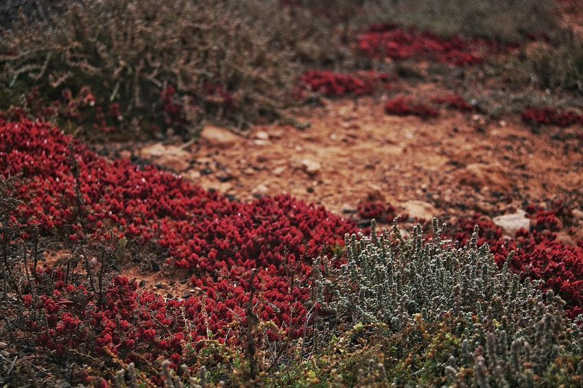 Power In Nature Life In Color Lanzarote Island Cocciniglia Red Nature Cochineal Colour Of Life Color Palette