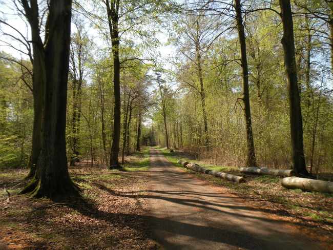 Early Spring Forest in the Danish Countryside - Forest Tree WoodLand Nature Tree Trunk Day Scenics Beauty In Nature The Way Forward No People Outdoors Sunlight Growth Branch Landscape Tree Area Sky Forest Trees Forest Floor Forest Path Spring Forår Danmark - in The Danish Countryside