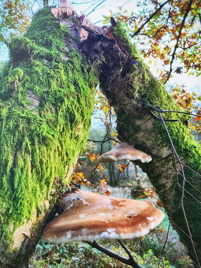 Sky Branch Day No People Outdoors Tree Nature Beauty In Nature Fungus Mold Mould Growth