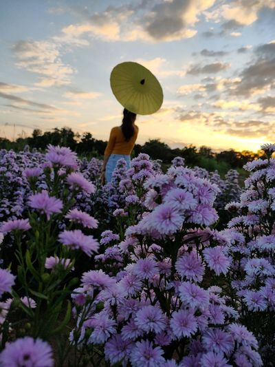 Low angle view of purple flowering plants on field during sunset