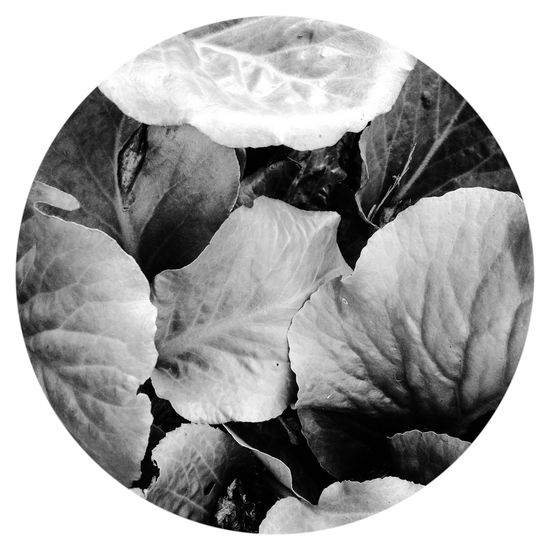 Leaves Monochrome Black And White Black & White
