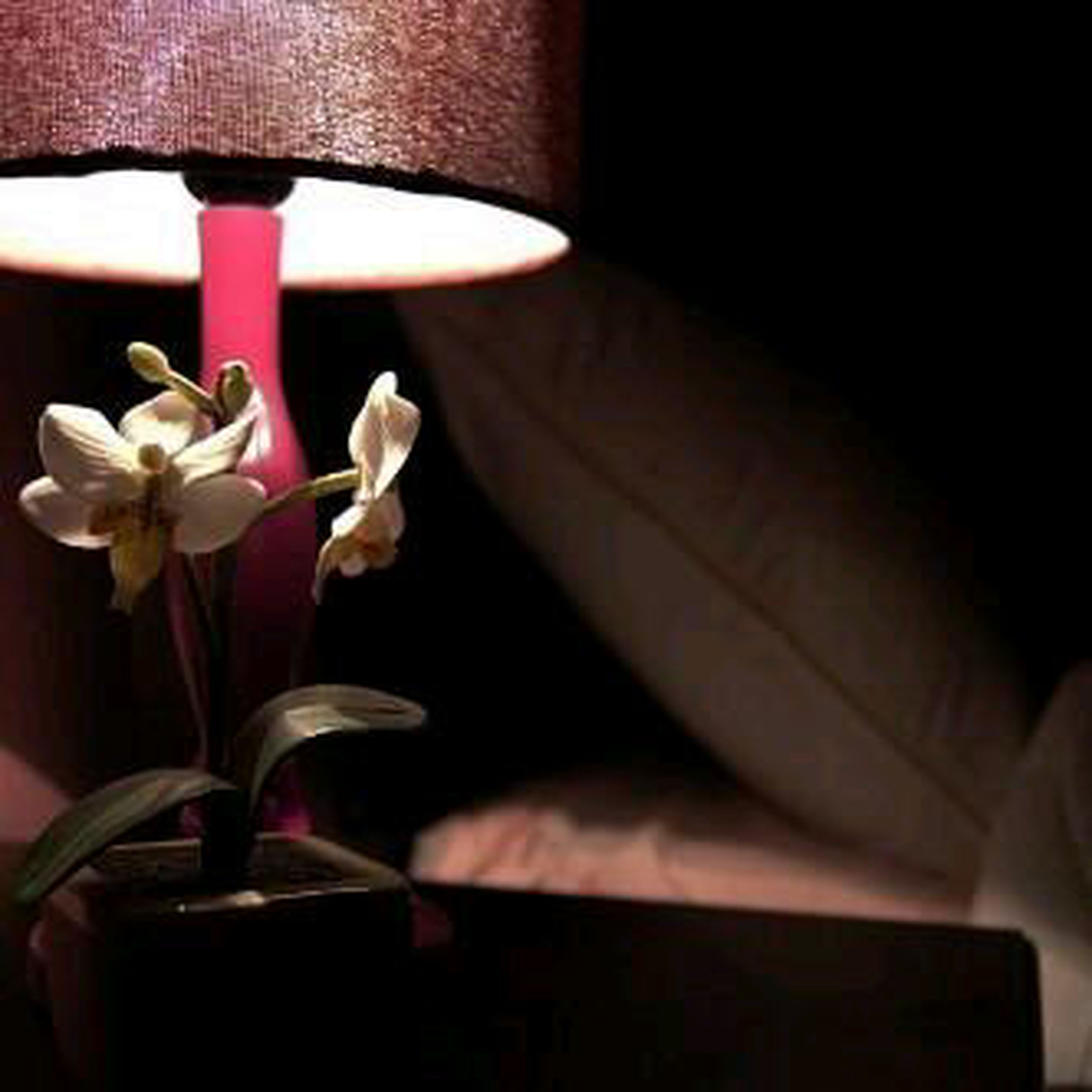 indoors, table, chair, home interior, flower, vase, potted plant, absence, still life, close-up, no people, furniture, sunlight, wall - building feature, empty, electric lamp, decoration, house, shadow, window