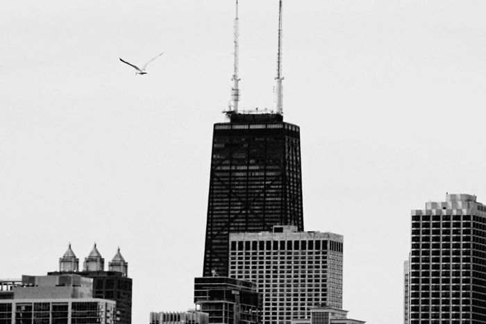 Hancock• Reedit Architecture Chicago Architecture City Skyscraper Built Structure Animal Themes Bird Photography Black And White Windows Light And Shadow Flight Seagull Flying High
