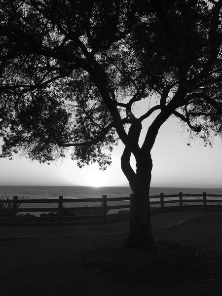 A California Sunset Nature Sunset Santa Monica California EyeEm Best Shots Fine Art Photography Beach Blackandwhite Bw_collection Shootermag Tree