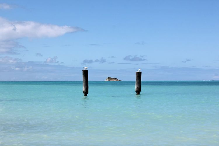 Seagulls sitting on Poles in the Caribbean Sea Beauty In Nature Caribbean Island Caribbean Life Caribbean Sea Day Horizon Over Water Nature No People Outdoors Pole Scenics Sea Seagulls Seagulls And Sea Sky Turquoise Water Turquoise Water Color Water Breathing Space