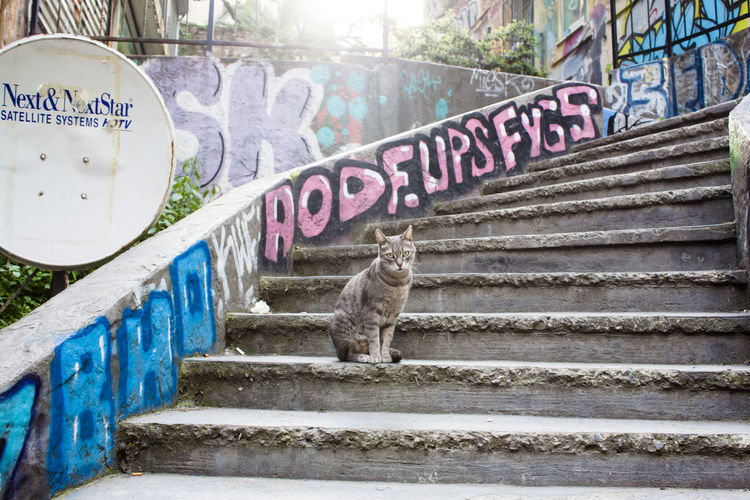 Staircase Animal Themes Animal Text Graffiti Built Structure Day Cat One Animal No People Steps And Staircases Architecture