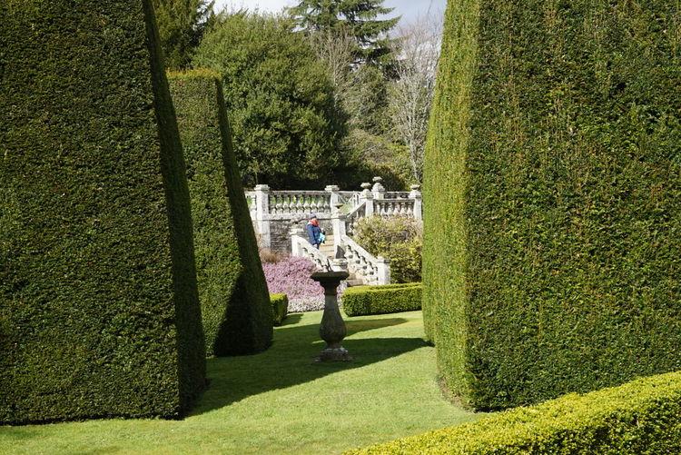 Topiaries in formal garden