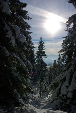 Tree Snow Pine Tree Sunlight Winter Pinaceae Nature Beauty In Nature Sky Landscape Cold Temperature Forest Outdoors Sun Evergreen Tree Scenics No People Day Slovakia🇸🇰 Travel Landscapes High Tatras :) Slovakia Nature Beauty In Nature Nature