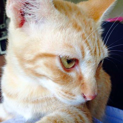 Thailand Idvj24hr Pets Mycat Animals Amimals