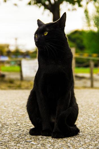 Himeji Castle Cat Animal Themes Cat Domestic Cat Feline Free Cat Toys Himeji's Cat One Animal Pets