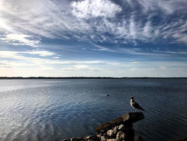 Alone... Bird Water Animals In The Wild Sky One Animal Nature Beauty In Nature Cloud - Sky Outdoors Scenics Animal Wildlife Tranquility Horizon Over Water Reflection Day Water Bird No People The Good Eye Series