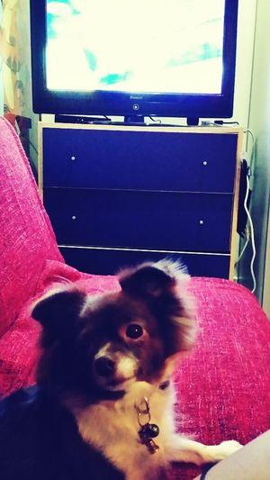 my baby moira!!! Dog