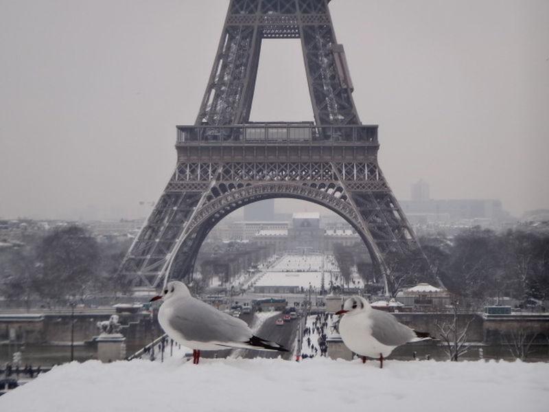 La Dame De Fer Paris Je T'aime Winter Cold Temperature Snow Weather Bird Travel Destinations Animals In The Wild Animal Wildlife Snowing No People