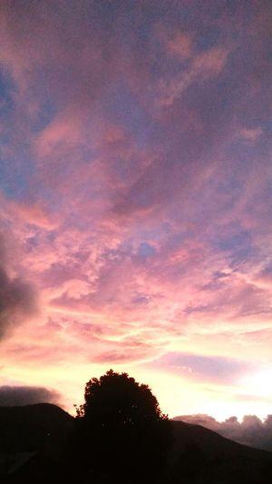 Tree Sunset Silhouette Dramatic Sky Sky Landscape