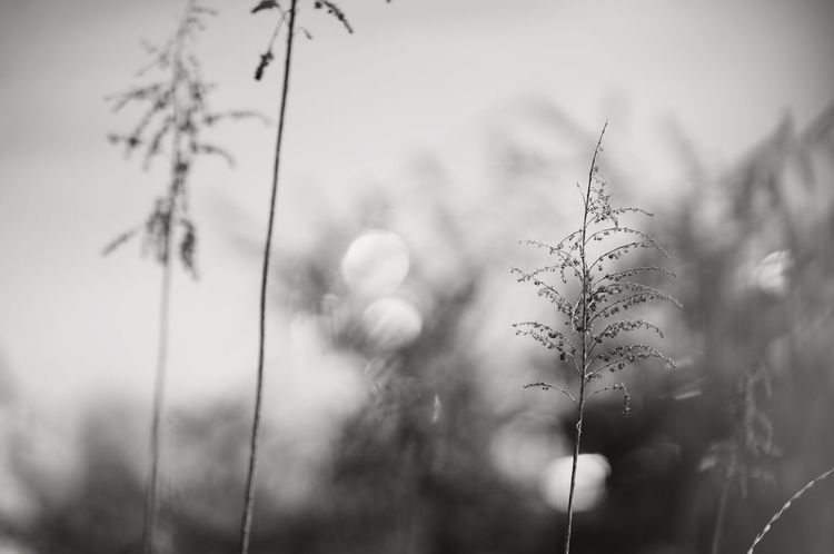 Bokeh 玉ボケ Naturelovers Nature_collection Nature Photography Nature Bokeh Photography Capture The Moment Showcase June Learn & Shoot: Balancing Elements Monochrome Black And White モノクロ Blackandwhite Abstract Deceptively Simple