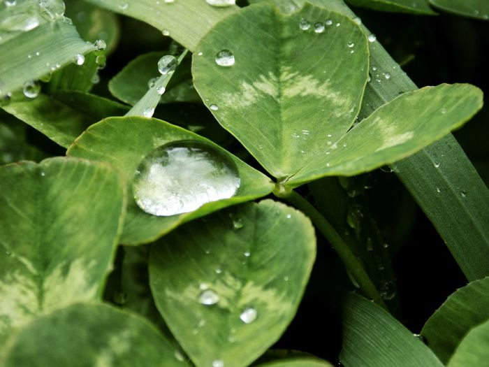 EyeEm Best Shots Taking Photos Taking Pictures Water Leaf Drop Wet Close-up Plant Green Color Dew Blade Of Grass Focus Leaf Vein Botany Natural Pattern Droplet Plant Life RainDrop Leaves In Bloom Blossom