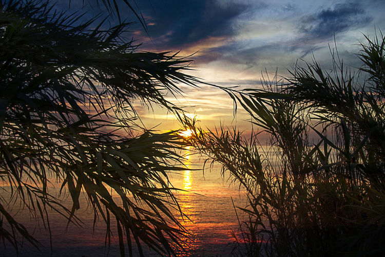Canon Livorno Livorno Italien  Livorno Italy Livorno. Tuscany.sea Palm Palme Sunset Sunset #sun #clouds #skylovers #sky #nature #beautifulinnature #naturalbeauty #photography #landscape Sunset Silhouettes Sunset_collection Tramonti Tramonti__italiani Tramonti_italiani Tramonto Tramonto;sole;cielo Tramonto♡ Tranquil Scene