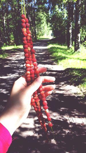 Forest Strawberries Enjoying Life Taking Photos