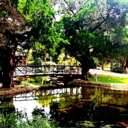 Florida Water Legacyvacationclub Moss Naturelovers Nature Scenery Forest Bridge 4thweekend Bestofig Instagramgold
