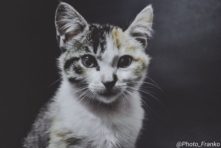 EyeEmNewHere Animal Themes Close-up Day Domestic Animals Domestic Cat Feline Indoors  Looking At Camera Mammal No People One Animal Pets Portrait Whisker