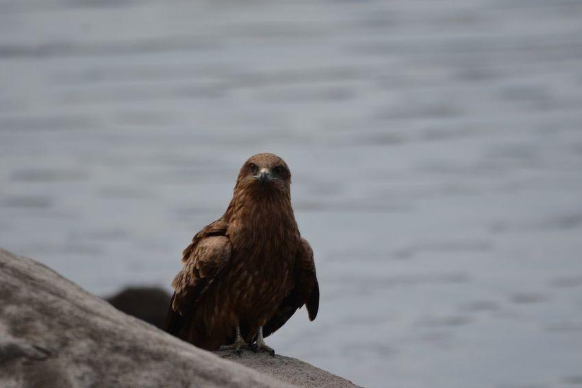 Animals In The Wild Animal Wildlife Animal Animal Themes Vertebrate Bird One Animal