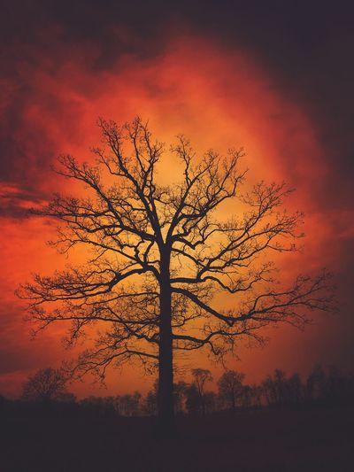 Silhouette bare tree on landscape against orange sky