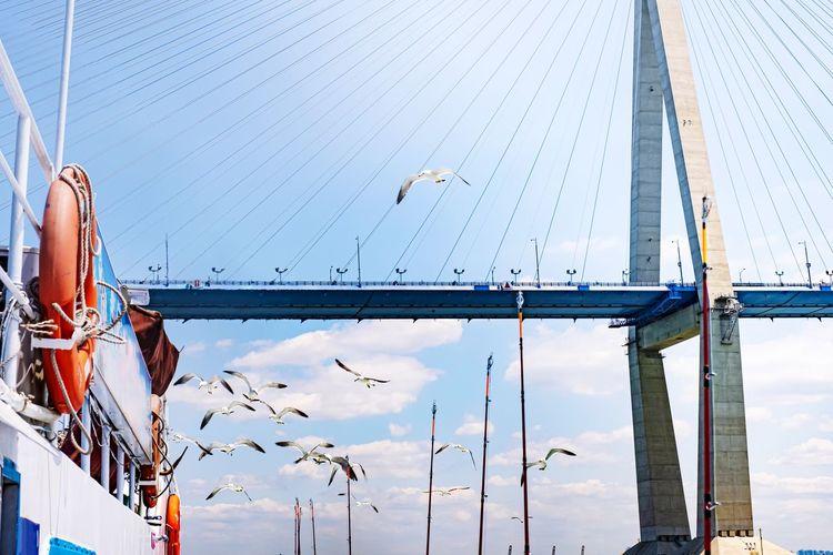 View of birds on bridge