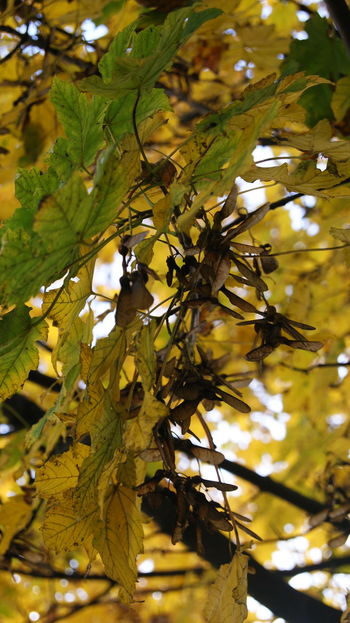 Free time in the park. Autumn Beauty In Nature Branch Będzin Close-up Day Free Time Growth Leaf Low Angle View Nature No People Outdoors Park Poland Tree Vertical Yellow