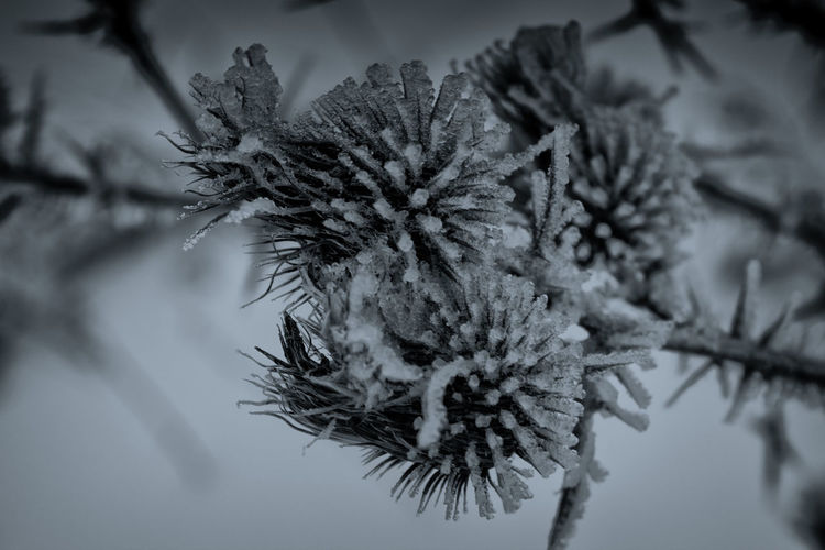 Nature Close-up Plant No People Growth Cold Temperature Outdoors Winter Beauty In Nature Branch Day Snow Freshness Blue Shades Thuja B/W Photography B/w Collection Frozen Snowflake Frost Tranquility