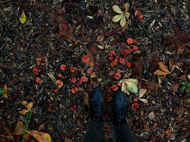 Down Mushrooms Wildlife Autumn Low Section Leaf Personal Perspective