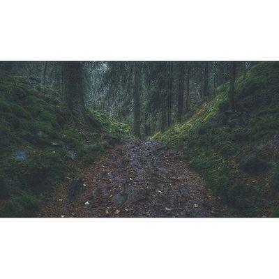I love running in the rain. 😁🏃🌲 I had such a great run in the forest today. Wonderful Gjelleråsmarka behind Stovner in Oslo . Oldtidsveien Visitnorway Visitscandinavia Trailrunner Trailrunning Foresttrail Traveling