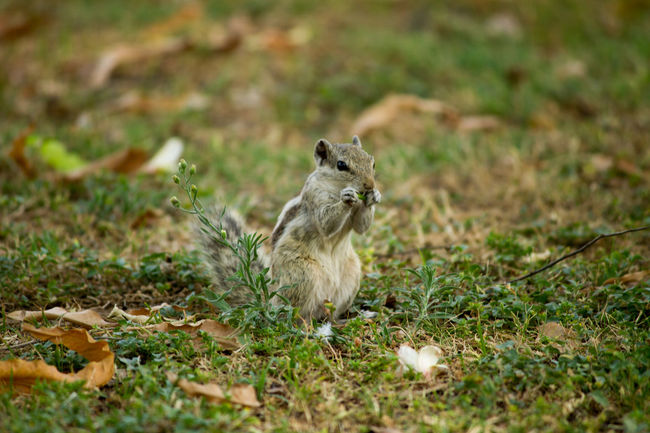 Cute little guy Animal Themes Beauty In Nature Close-up Cute Day Field Grass Grassy Green Color Growth June Showcase Mammal Nature No People Outdoors Selective Focus Wildlife