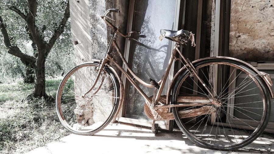 Bike Autumn