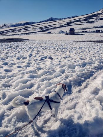 Adventure Dog Hiking Leash And Harness Beagle Jackrussellterrier Mixed Breed Dog Environment Conservation Alpine Mountain Pass Rocky Mountains Snow Cold Temperature Full Length Mountain Sky Landscape Snowcapped Mountain Pet Leash Canine Pet Equipment