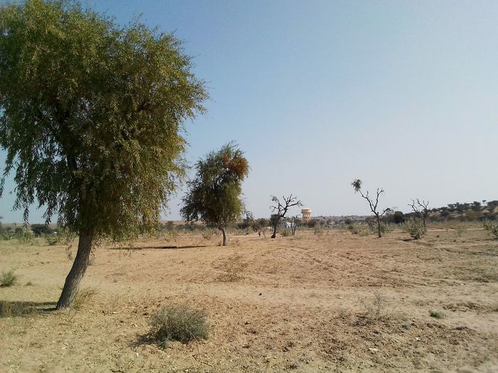 Landscape_photography Trees Desert Landscape Desrt Scenes Colourful Rajasthan Tree Outdoors Nature Day Sky Beauty In Nature No People