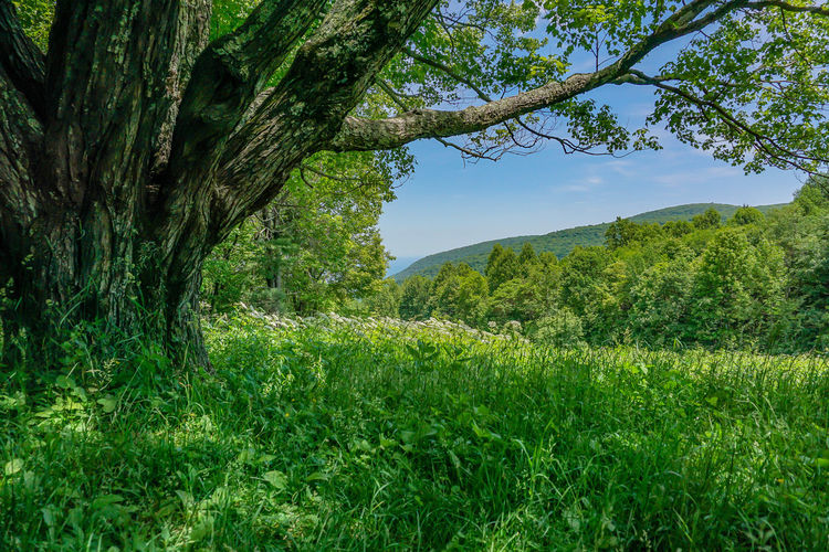 Beauty In Nature Branch Day Field Forest Grass Green Color Growth Landscape Mountain Nature No People Outdoors Scenics Sky Tranquil Scene Tranquility Tree