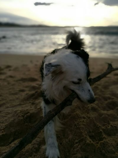 Animal Themes One Animal Domestic Animals Sea Water Mammal Beach Nature Dog Outdoors No People Sunset Pets Wave Close-up Horizon Over Water Sky Day EyeEm Gallery Nofilter NoEdits  EyeEm Best Shots Pet Portraits