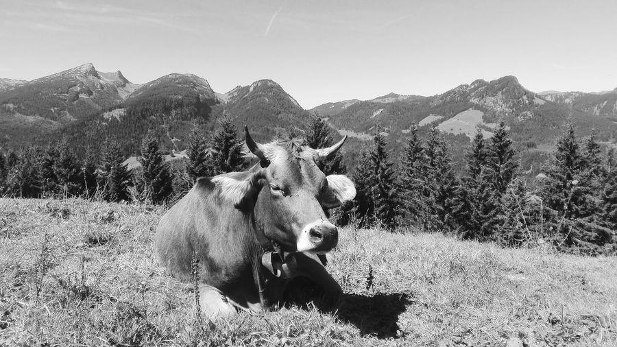 Allgäu in black n' white 😁 One Animal Animal Themes Mountain Nature