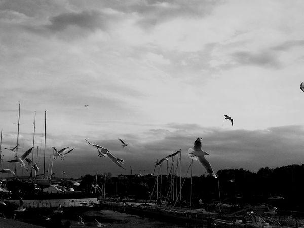 Birds Sea Birds Liberty Flying In The Sky Flying Birds Flyingbirds Flying Bird Flying Away