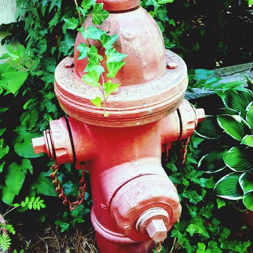 Retired from duty, now garden ornament.... Fire Hydrant Leaf Safety Protection Pipe - Tube Rescue Close-up Emergency Equipment Extinguishing