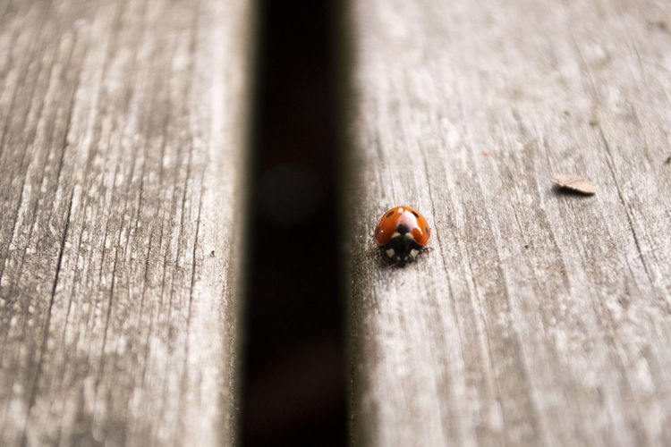 High angle view of ladybug on wood
