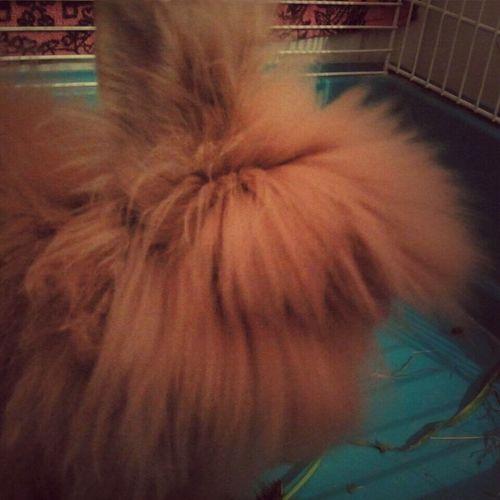 Aunque no lo creas, esto es un conejo