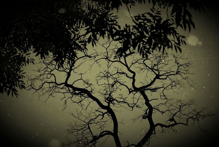 Tree Branch Water Silhouette Tree Trunk Sky