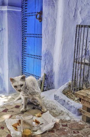 No People Built Structure Building Exterior Day Cat Chefchaouen Morocco Blue Door Coffee Animal Pet Bluecity Landmark Travel Travel Destinations White Pet Portraits