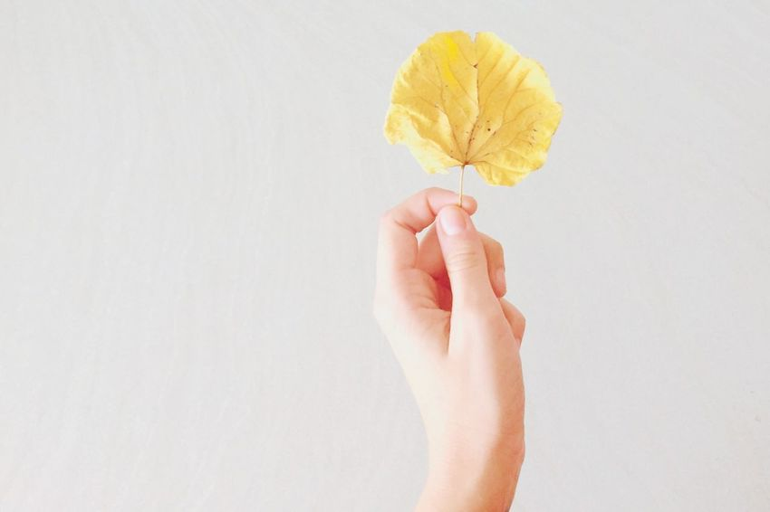 Leaves Hand Human Autumn Autumn Colors Bodyart Yellow Abstract Relaxing Imagination Autumn Leaves That's Me Authentic Moments Autumn Collection Colors Of Autumn Minimalism Taking Photos Yellow Leaves