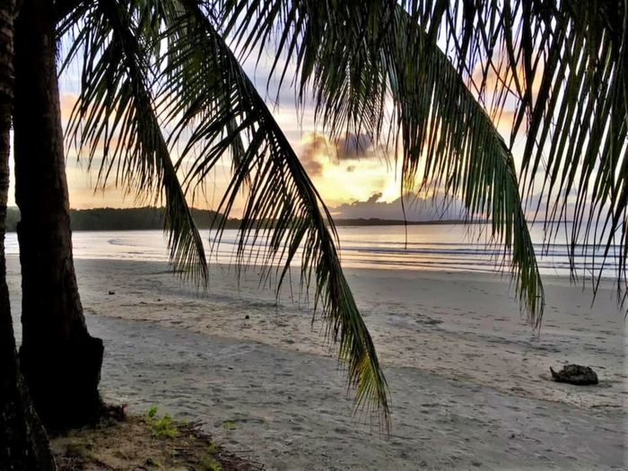 Under a Coconut Free Water Beach Land Palm Tree Tree Sea Tropical Climate Sky Beauty In Nature Sand Tranquility Plant Tranquil Scene Scenics - Nature Nature No People Growth Sunset Idyllic Outdoors Horizon Over Water Palm Leaf Coconut Palm Tree